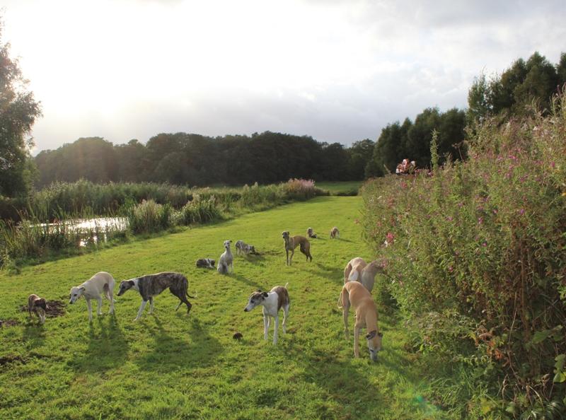 22 Hunde auf einem Fleck,und die Babies mittendrin