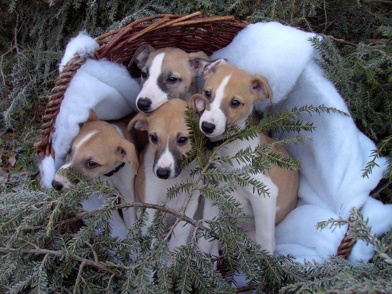 Wann kommt denn nun der Nikolaus?