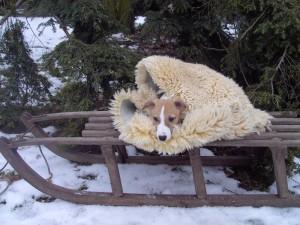 Jason der Schneehase
