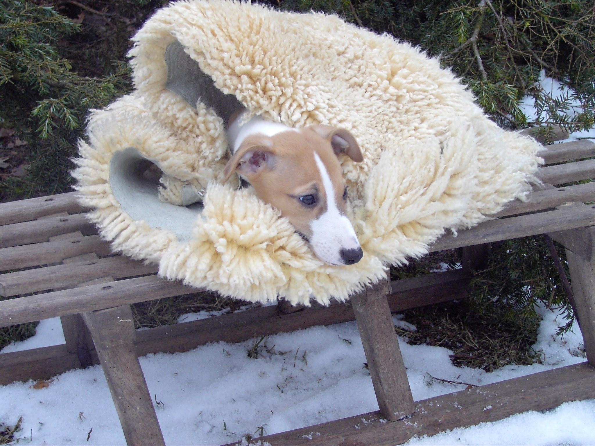 Wir wünschen allen Windhundfreunden ein spannendes  Jahr 2011.