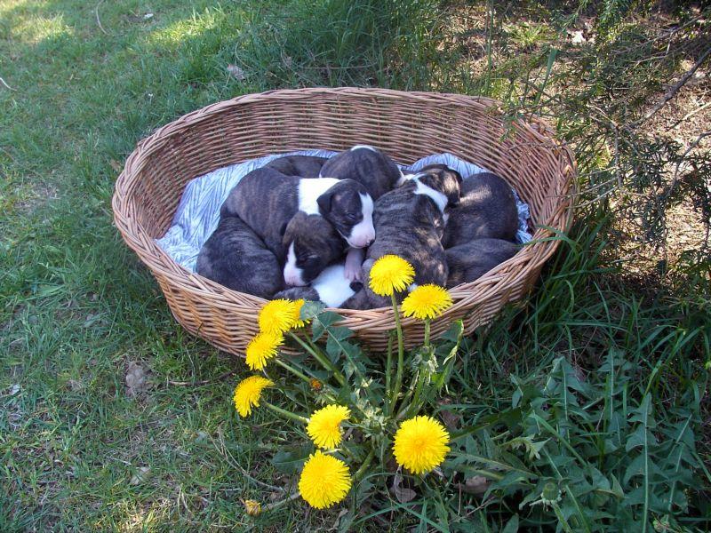 """Ganz herzliche Ostergrüsse an alle von den """"K""""-Babies und natürlich auch von uns!"""