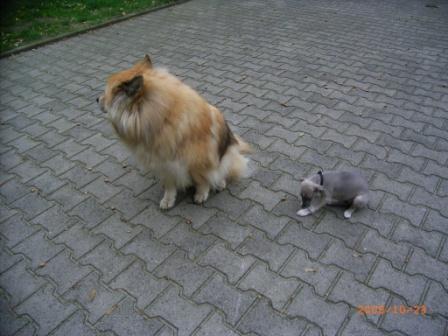 Heartbreacker und Aiko