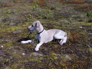 Ivory am Biotop - 9 Wochen alt