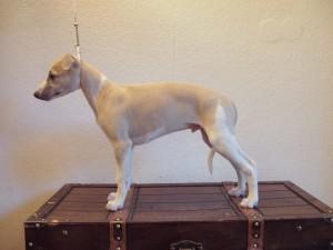 Ivory 10 Wochen alt