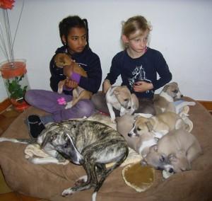 Moesha und Mira haben heute die Babies besucht. (7 Wo. alt)