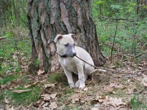 Idomeneo 8 Wochen alt beim Ausflug in den Wald