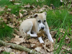 Ilenia mit 8 Wochen im Wald