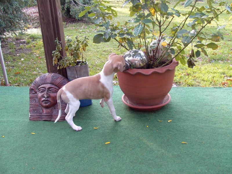 Jeunesse 7 Wochen alt, wird mal Gartengestalterin