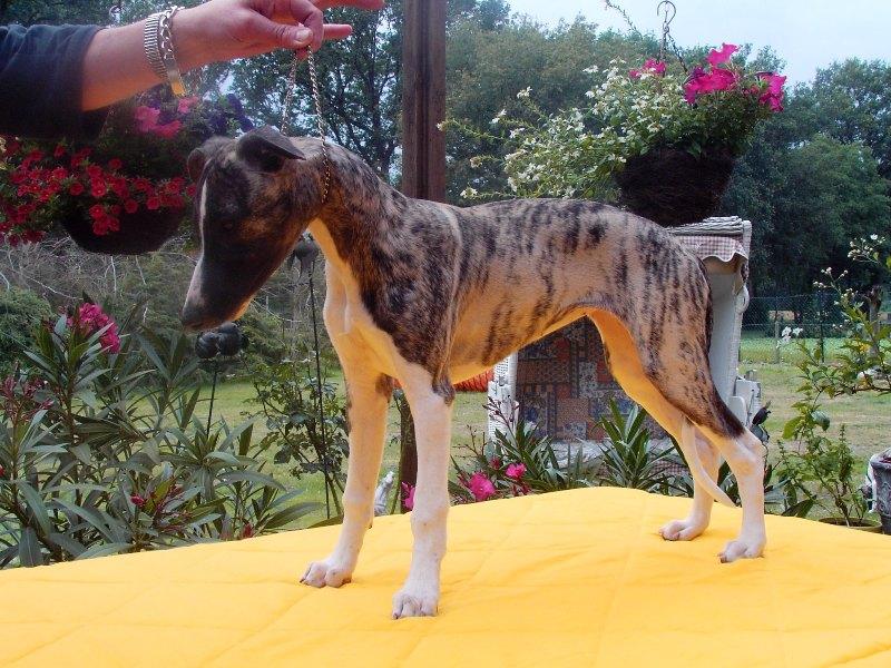 Kalypso 15 Wochen alt
