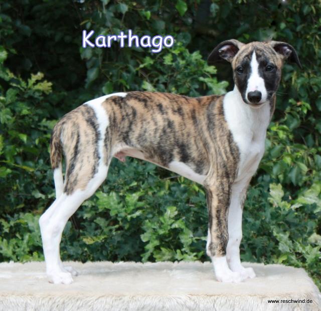 Karthago 11 Wochen alt