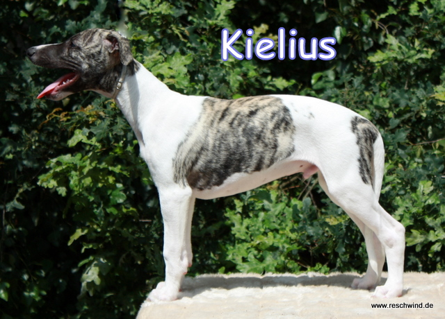 Kielius 11 Wochen alt
