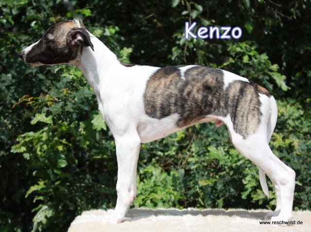 Kenzo 11 Wochen alt