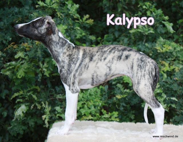 Kalypso 11 Wochen alt
