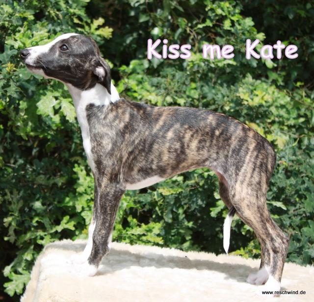 Kiss me Kate 11 Wochen alt