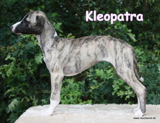 Kleopatra 11 Wochen alt