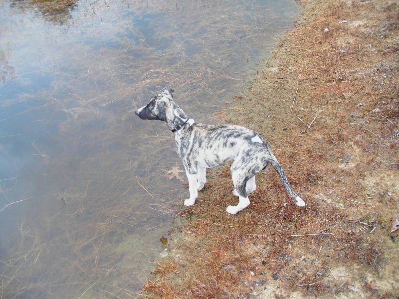 Kalypso am Biotop 12 Wochen alt