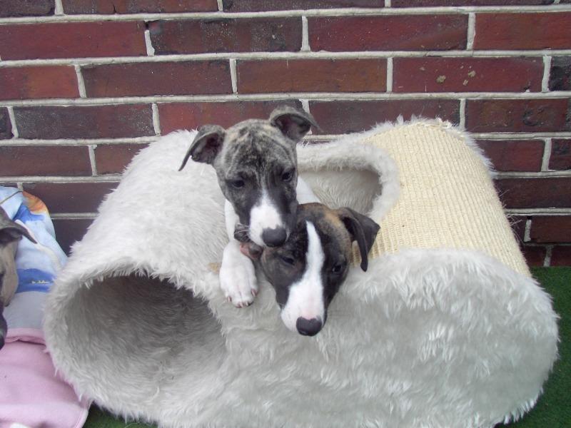 Kielius und Kenzo 10 Wochen alt
