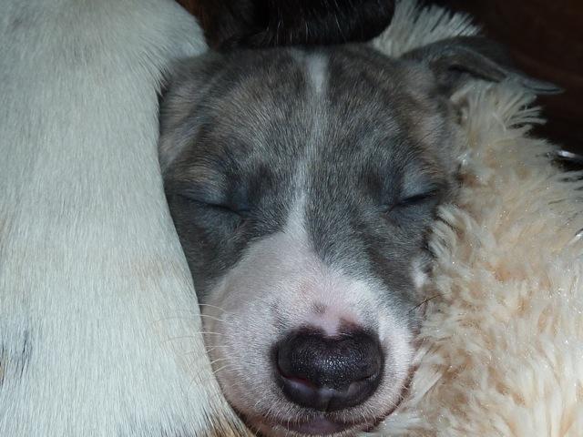 Lauro 4 Wochen alt