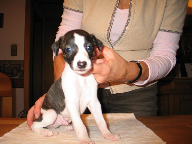 Lenito 4 Wochen alt