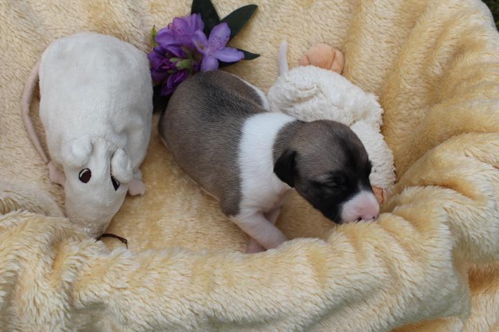 Mable 2 Wochen alt