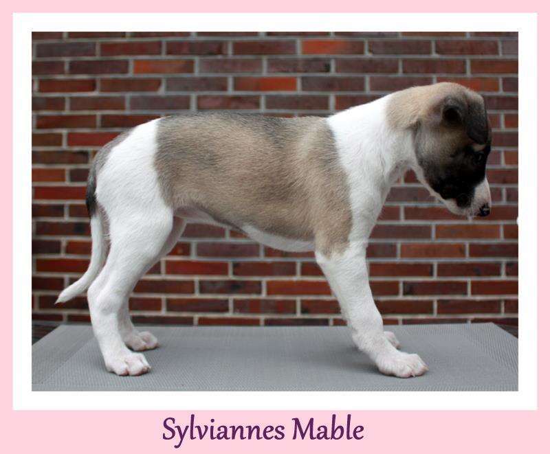 Mable 6 Wochen alt