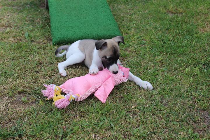 Mable 7 Wochen alt