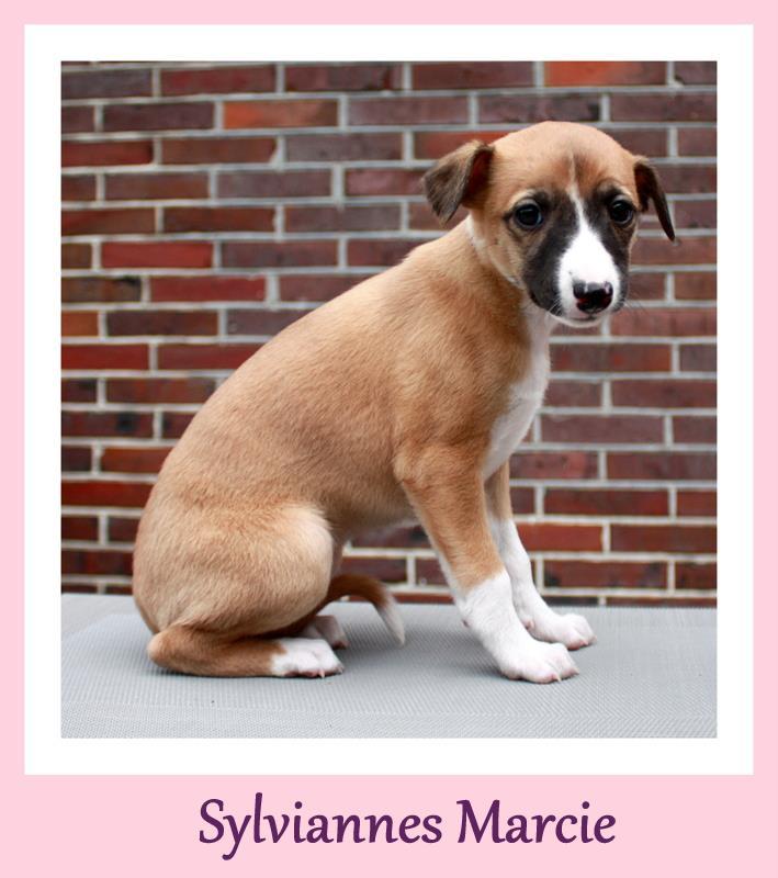 Marcie 6 Wochen alt