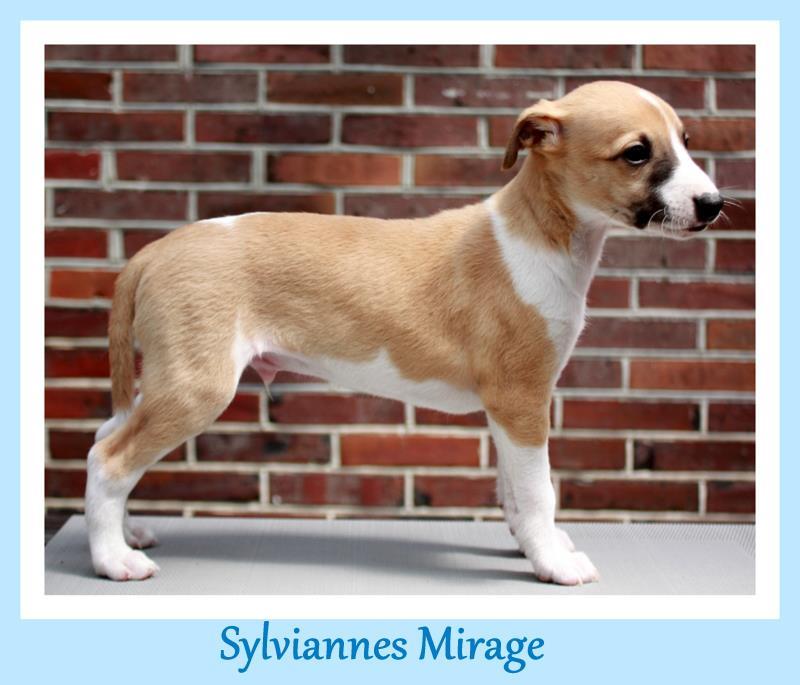 Mirage 6 Wochen alt
