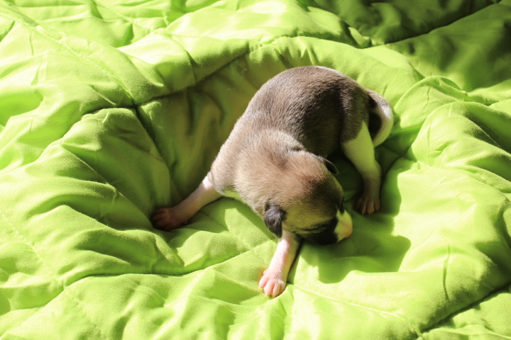 Morphin 1 Woche alt
