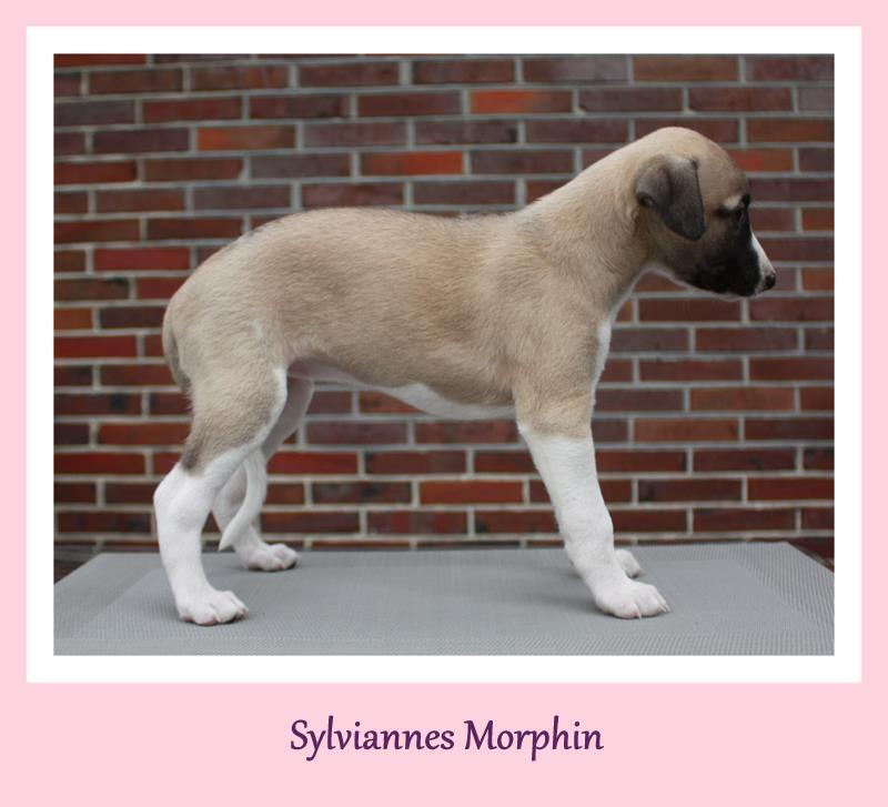 Morphin 6 Wochen alt