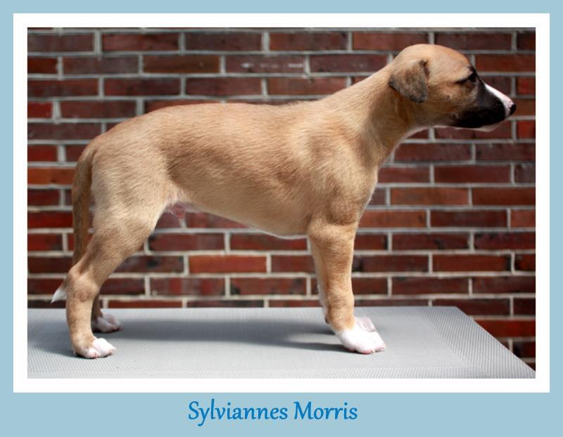 Morris 6 Wochen alt