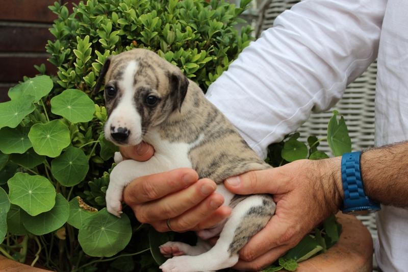 Onyx 4 Wochen alt