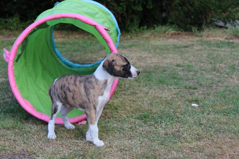 Orfeo 6 Wochen alt