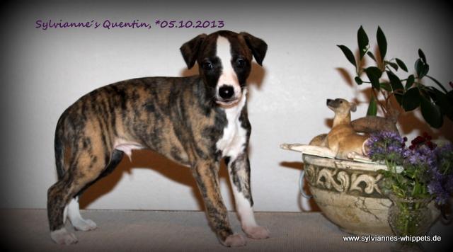 Quentin 6 Wochen alt