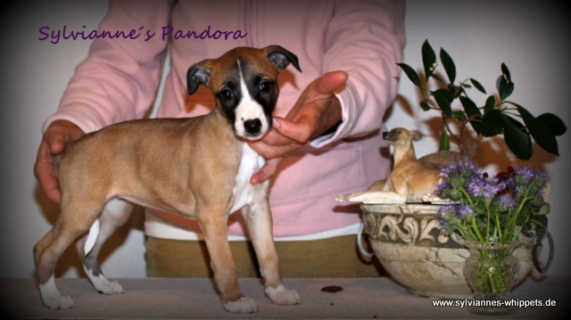 Pandora 6 Wochen alt
