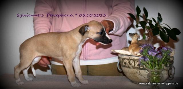 Persephone 6 Wochen alt