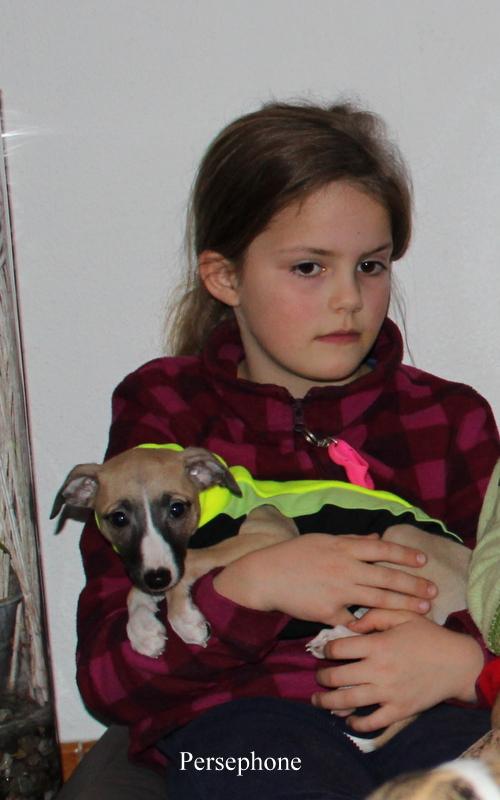 Persephone modelt für Siegerhund