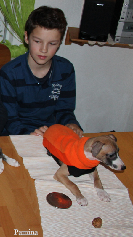 Pamina Model für Siegerhund.