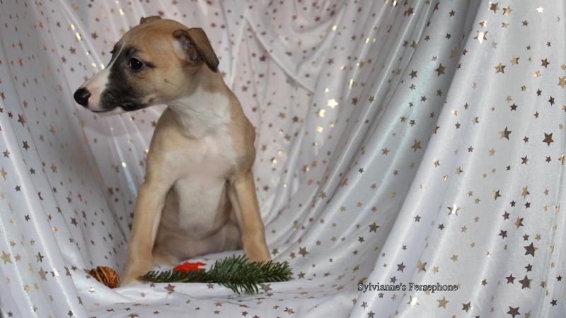 Persephone 8 Wochen alt