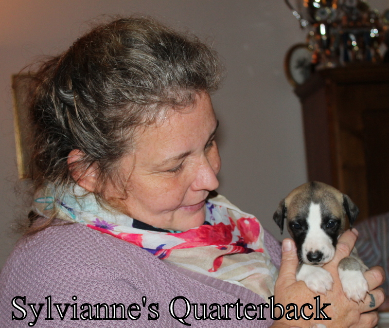 Quarterback 4 Wochen alt