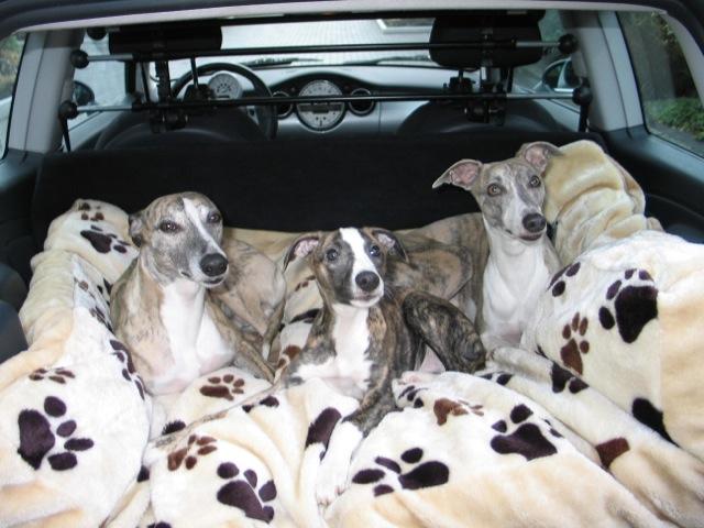 Horatio, Quentin und Lauro freuen sich über die kuschelige Liegefläche im Auto (und haben auch erst mal ein Nickerchen von einer Stunde abgehalten)