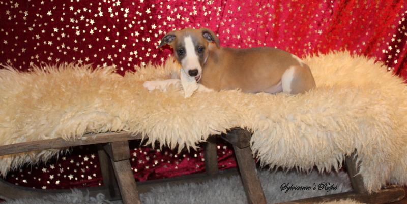 Rufus 8 Wochen alt