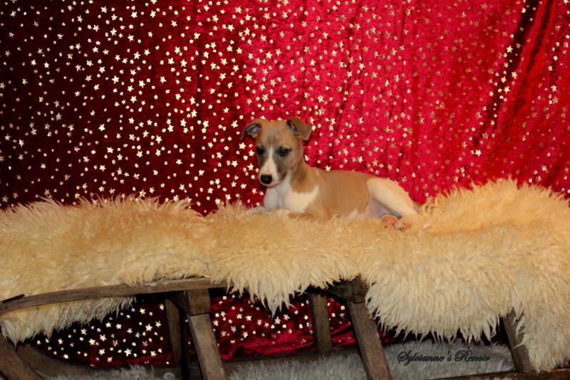 Renoir 8 Wochen alt