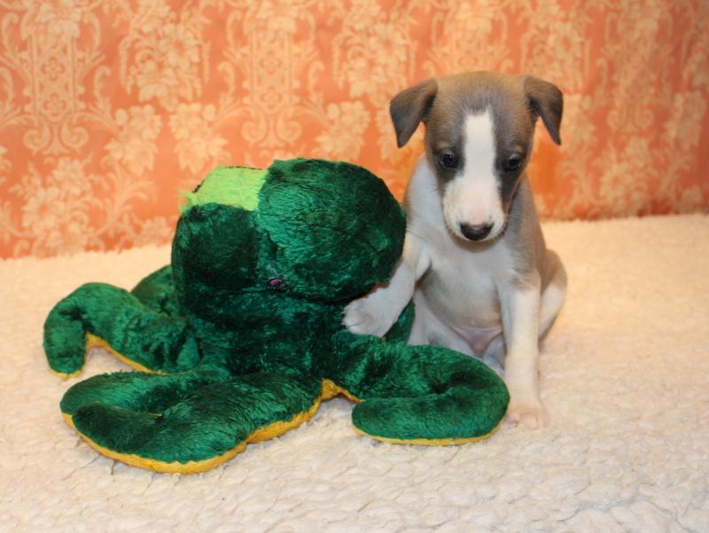 Rufus 4 Wochen alt