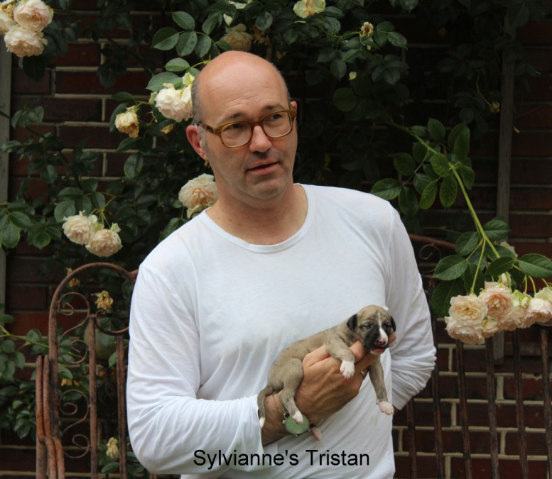 Sylvianne's Tristan
