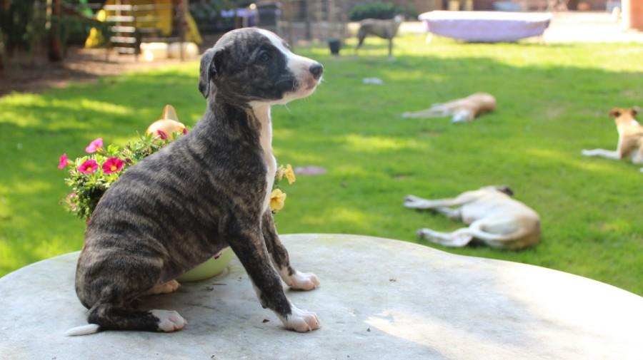 Theophanu 6 Wochen alt