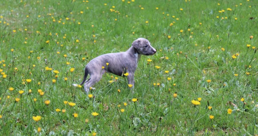 Tinker Bell 4 Wochen alt