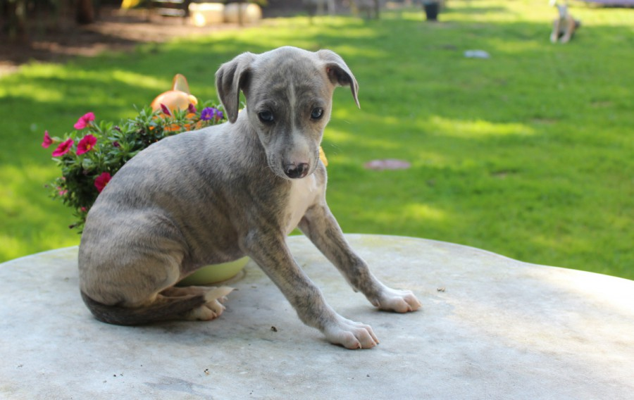 Tinker Bell 6 Wochen alt