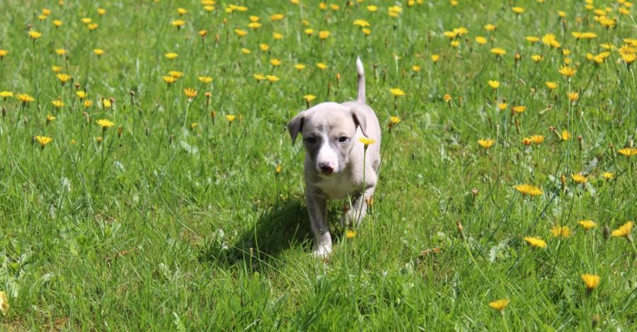 Titus 4 Wochen alt
