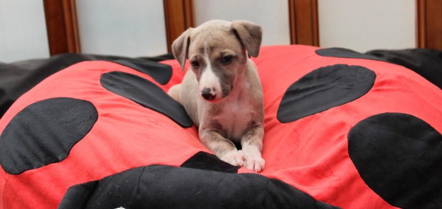 Titus 5 Wochen alt